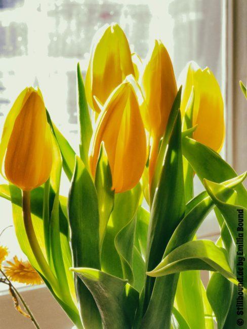 Foto von Tulpenstrauss im Sonnenlicht