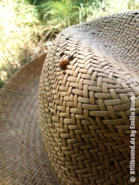Marienkäfer im Sommer auf Strohhut