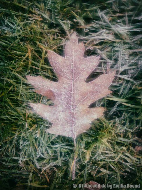 Blatt im Herbst mit Raureif